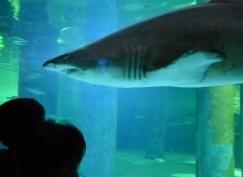 acquario cattolica squalo