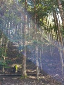 vallombrosa - percorso bosco
