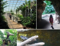 foresta di darwin