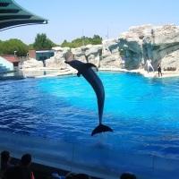 La laguna dei delfini a Oltremare