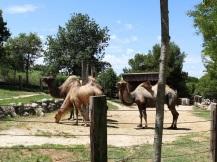zoo falconara (2)