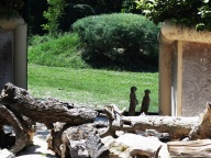 zoo falconara (5)