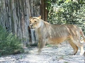 zoo falconara (6)