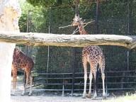 zoo falconara (8)