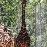 Il Parco Zoo di Falconara